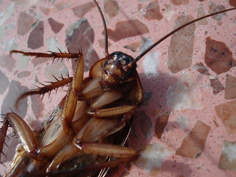 Борба с хлебарките