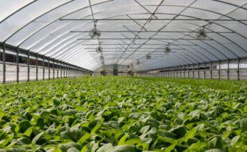 отглеждане на зеленчуци в оранжерия